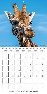 Animals from the Zoo (Wall Calendar 2019 300 × 300 mm Square) - Produktdetailbild 1