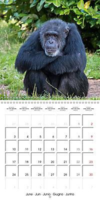 Animals from the Zoo (Wall Calendar 2019 300 × 300 mm Square) - Produktdetailbild 6