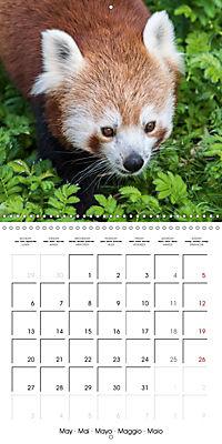 Animals from the Zoo (Wall Calendar 2019 300 × 300 mm Square) - Produktdetailbild 5