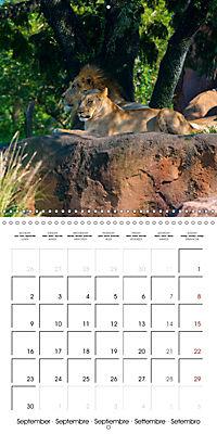 Animals from the Zoo (Wall Calendar 2019 300 × 300 mm Square) - Produktdetailbild 9