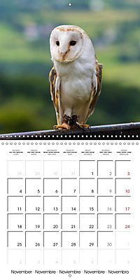 Animals from the Zoo (Wall Calendar 2019 300 × 300 mm Square) - Produktdetailbild 11