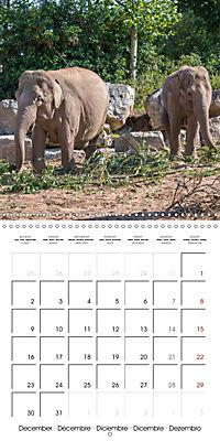 Animals from the Zoo (Wall Calendar 2019 300 × 300 mm Square) - Produktdetailbild 12