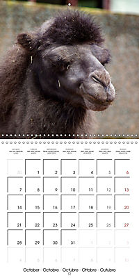 Animals from the Zoo (Wall Calendar 2019 300 × 300 mm Square) - Produktdetailbild 10