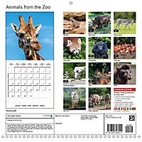 Animals from the Zoo (Wall Calendar 2019 300 × 300 mm Square) - Produktdetailbild 13