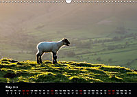 Animals in the countryside (Wall Calendar 2019 DIN A3 Landscape) - Produktdetailbild 5