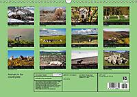 Animals in the countryside (Wall Calendar 2019 DIN A3 Landscape) - Produktdetailbild 13