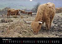 Animals in the countryside (Wall Calendar 2019 DIN A3 Landscape) - Produktdetailbild 2