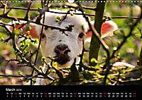 Animals in the countryside (Wall Calendar 2019 DIN A3 Landscape) - Produktdetailbild 3