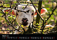Animals in the countryside (Wall Calendar 2019 DIN A3 Landscape) - Produktdetailbild 3