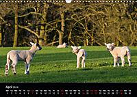 Animals in the countryside (Wall Calendar 2019 DIN A3 Landscape) - Produktdetailbild 4