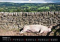 Animals in the countryside (Wall Calendar 2019 DIN A3 Landscape) - Produktdetailbild 10