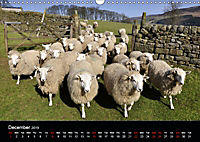 Animals in the countryside (Wall Calendar 2019 DIN A3 Landscape) - Produktdetailbild 12