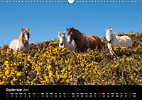 Animals in the countryside (Wall Calendar 2019 DIN A3 Landscape) - Produktdetailbild 9