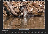 Animals of the Pantanal / UK Version (Wall Calendar 2019 DIN A4 Landscape) - Produktdetailbild 1