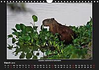 Animals of the Pantanal / UK Version (Wall Calendar 2019 DIN A4 Landscape) - Produktdetailbild 3