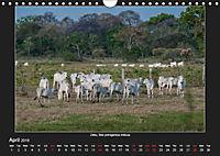 Animals of the Pantanal / UK Version (Wall Calendar 2019 DIN A4 Landscape) - Produktdetailbild 4
