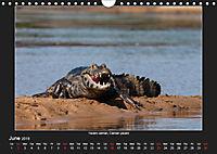 Animals of the Pantanal / UK Version (Wall Calendar 2019 DIN A4 Landscape) - Produktdetailbild 6