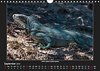 Animals of the Pantanal / UK Version (Wall Calendar 2019 DIN A4 Landscape) - Produktdetailbild 9