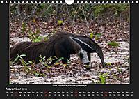 Animals of the Pantanal / UK Version (Wall Calendar 2019 DIN A4 Landscape) - Produktdetailbild 11