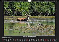 Animals of the Pantanal / UK Version (Wall Calendar 2019 DIN A4 Landscape) - Produktdetailbild 12