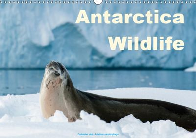 Antarctica Wildlife / UK-Version (Wall Calendar 2019 DIN A3 Landscape), Juergen Woehlke