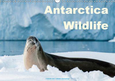 Antarctica Wildlife / UK-Version (Wall Calendar 2019 DIN A3 Landscape), Juergen Woehlke