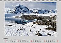 Antarctica Wildlife / UK-Version (Wall Calendar 2019 DIN A3 Landscape) - Produktdetailbild 6