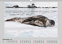 Antarctica Wildlife / UK-Version (Wall Calendar 2019 DIN A3 Landscape) - Produktdetailbild 11