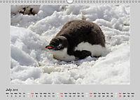 Antarctica Wildlife / UK-Version (Wall Calendar 2019 DIN A3 Landscape) - Produktdetailbild 7