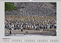 Antarctica Wildlife / UK-Version (Wall Calendar 2019 DIN A3 Landscape) - Produktdetailbild 1