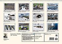 Antarctica Wildlife / UK-Version (Wall Calendar 2019 DIN A3 Landscape) - Produktdetailbild 13