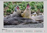 Antarctica Wildlife / UK-Version (Wall Calendar 2019 DIN A3 Landscape) - Produktdetailbild 3