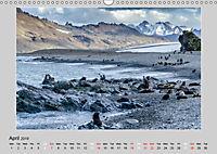 Antarctica Wildlife / UK-Version (Wall Calendar 2019 DIN A3 Landscape) - Produktdetailbild 4