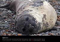 Antarktische Impressionen (Wandkalender 2019 DIN A3 quer) - Produktdetailbild 4