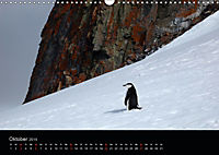 Antarktische Impressionen (Wandkalender 2019 DIN A3 quer) - Produktdetailbild 10