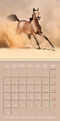 Arabian Horses - The Kings of Desert (Wall Calendar 2019 300 × 300 mm Square) - Produktdetailbild 12