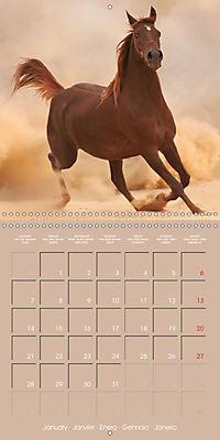 Arabian Horses - The Kings of Desert (Wall Calendar 2019 300 × 300 mm Square) - Produktdetailbild 1