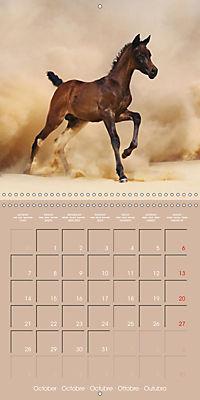 Arabian Horses - The Kings of Desert (Wall Calendar 2019 300 × 300 mm Square) - Produktdetailbild 10
