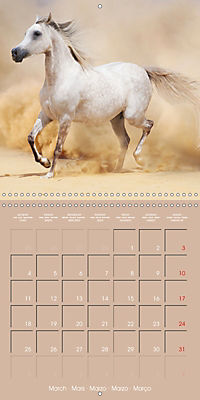 Arabian Horses - The Kings of Desert (Wall Calendar 2019 300 × 300 mm Square) - Produktdetailbild 3