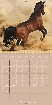 Arabian Horses - The Kings of Desert (Wall Calendar 2019 300 × 300 mm Square) - Produktdetailbild 4