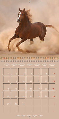 Arabian Horses - The Kings of Desert (Wall Calendar 2019 300 × 300 mm Square) - Produktdetailbild 7