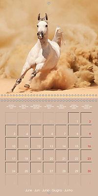 Arabian Horses - The Kings of Desert (Wall Calendar 2019 300 × 300 mm Square) - Produktdetailbild 6