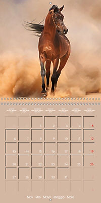 Arabian Horses - The Kings of Desert (Wall Calendar 2019 300 × 300 mm Square) - Produktdetailbild 5