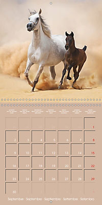 Arabian Horses - The Kings of Desert (Wall Calendar 2019 300 × 300 mm Square) - Produktdetailbild 9