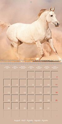 Arabian Horses - The Kings of Desert (Wall Calendar 2019 300 × 300 mm Square) - Produktdetailbild 8
