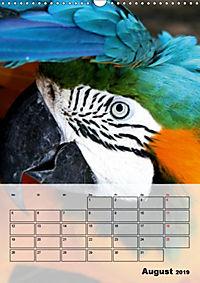 Aras. Der Papageien-Planer (Wandkalender 2019 DIN A3 hoch) - Produktdetailbild 8