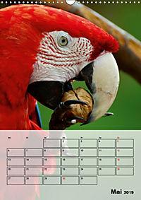 Aras. Der Papageien-Planer (Wandkalender 2019 DIN A3 hoch) - Produktdetailbild 5
