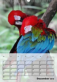 Aras. Der Papageien-Planer (Wandkalender 2019 DIN A3 hoch) - Produktdetailbild 12