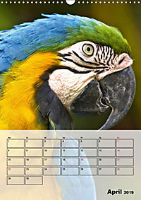 Aras. Der Papageien-Planer (Wandkalender 2019 DIN A3 hoch) - Produktdetailbild 4