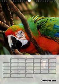 Aras. Der Papageien-Planer (Wandkalender 2019 DIN A3 hoch) - Produktdetailbild 10